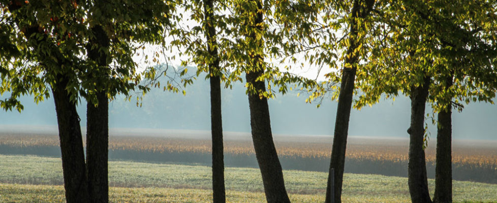 Tree lined road overlooking field