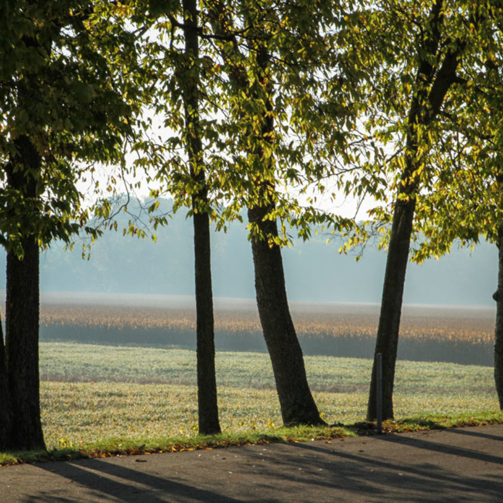 Tree lined road overlooking field